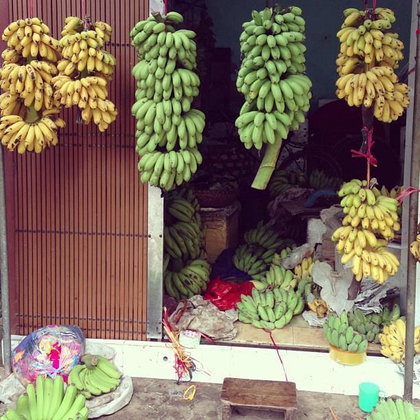 Chuối ngự Nam Định